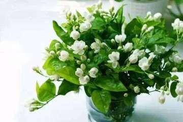 花卉盆栽贮运后叶片可溶性糖含量 降低
