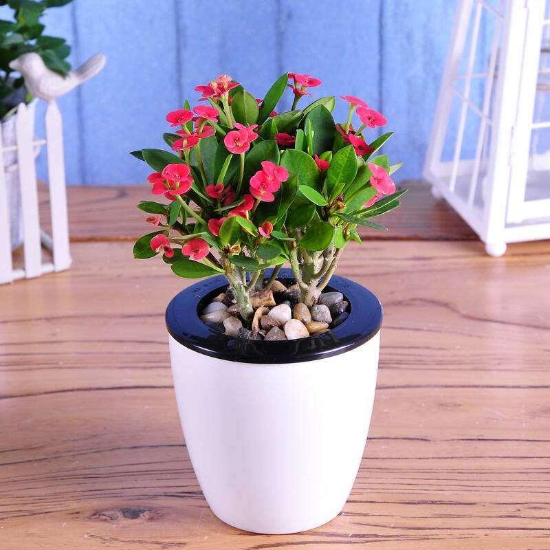 花卉盆栽贮运后叶片脯氨酸含量 怎么样