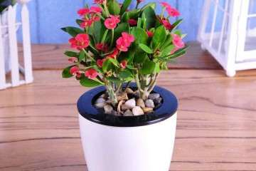 为什么盆栽花卉要长途脱土贮运 图片