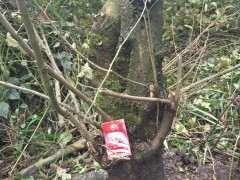 这个朴树下山桩 有挖的价值吗 图片