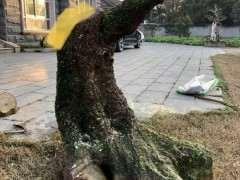 树下山桩 150斤 谁来帮忙设计 图片