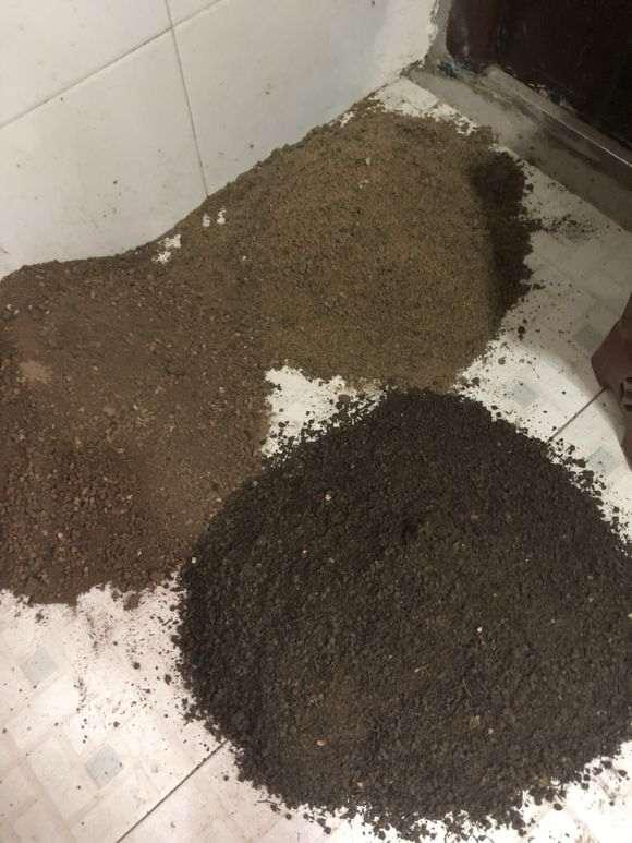 腊梅下山桩对土壤的要求是什么 图片