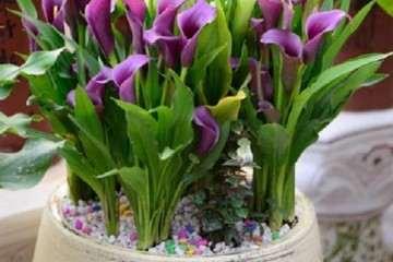 全国盆栽花卉生产规模正在匀速增长