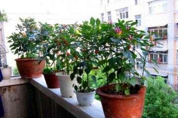 百草枯对辣椒盆栽土壤肥力的影响探讨
