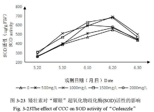 矮壮素对百合盆栽超氧化物歧化酶活性的影响
