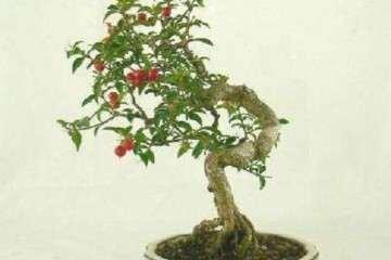盆栽桃树怎么整形修剪的方法 图片
