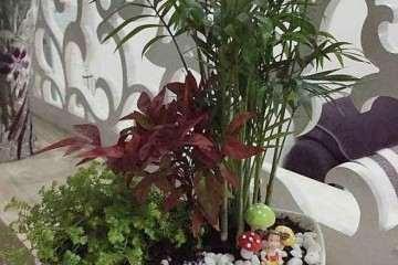 北京市组合盆栽的市民调查 图片
