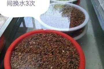 怎么用煤渣养多肉植物的方法 图片