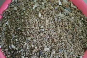 怎么用沙子养多肉植物的方法 图片