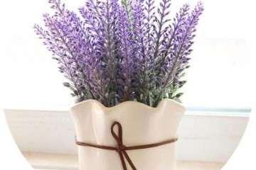 薰衣草盆栽属植有哪些分类 图片