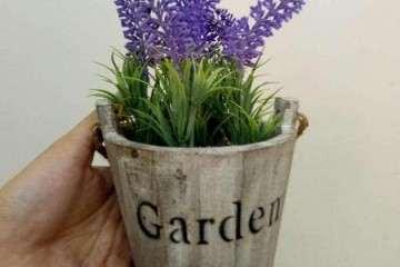 薰衣草盆栽植物有哪些应用研究 图片