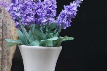 不同基质对盆栽薰衣草生长发育的影响
