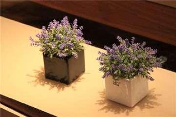 不同基质对盆栽薰衣草栽培的影响