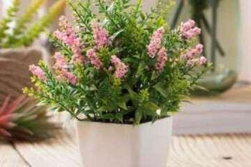 不同基质对薰衣草盆栽生长有什么影响