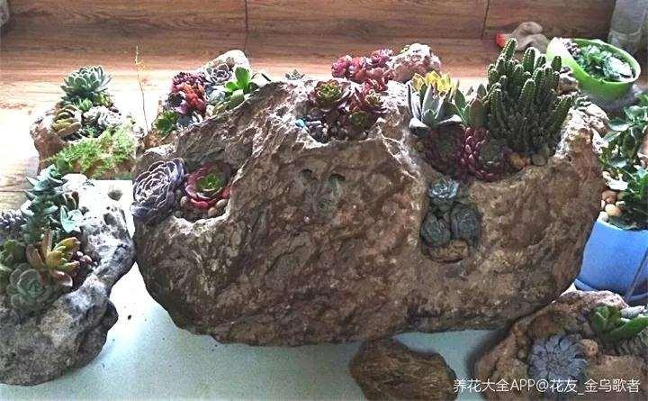 怎么用石头种植多肉植物的方法