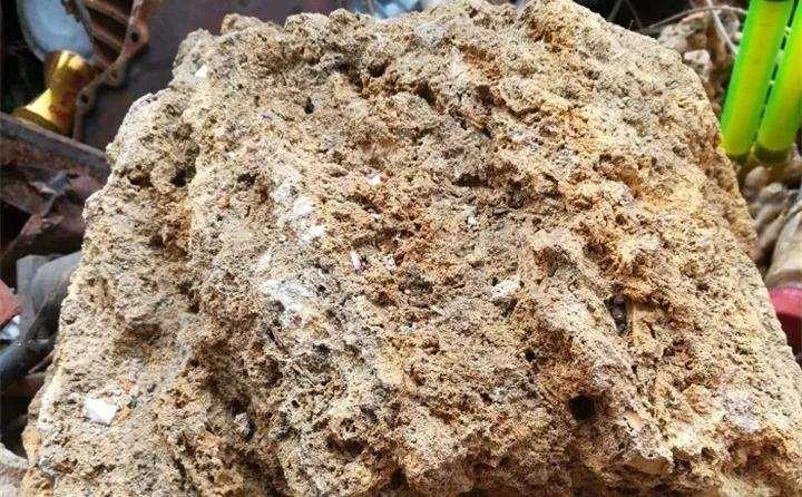 制作石头多肉植物的3个方法