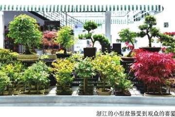 天津组合盆栽大赛选拔赛圆满结束
