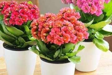 大学生室内名贵盆栽花卉创业市场调查