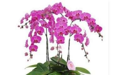 室内花卉盆栽的市场分析 图片
