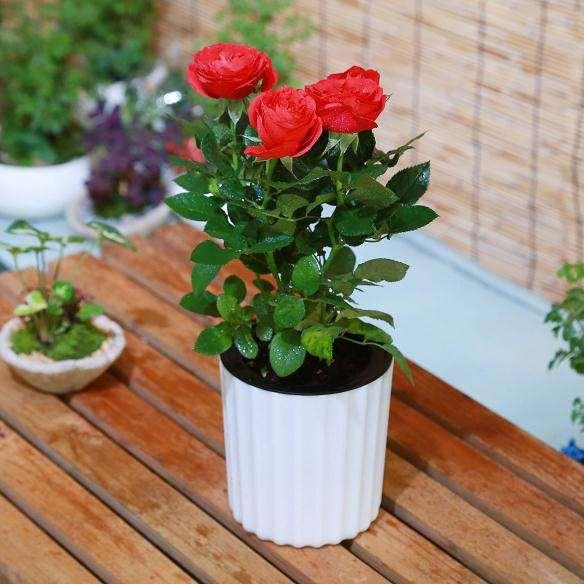 室内盆栽花卉有什么营销策略及运营方案