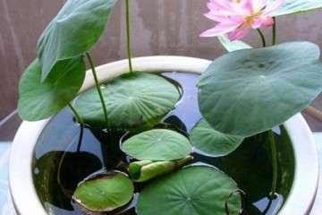 大学生室内盆栽花卉的创业成果 图片