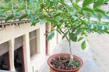 氮磷钾配比施肥对山核桃盆栽生长的影响