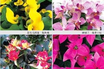 第18届青州花卉盆栽博览交易会举办