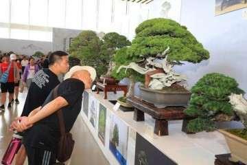 北京世园会国际盆景竞赛 图片