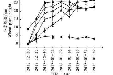 不同改性纤维素对小麦盆栽植株生长的影响
