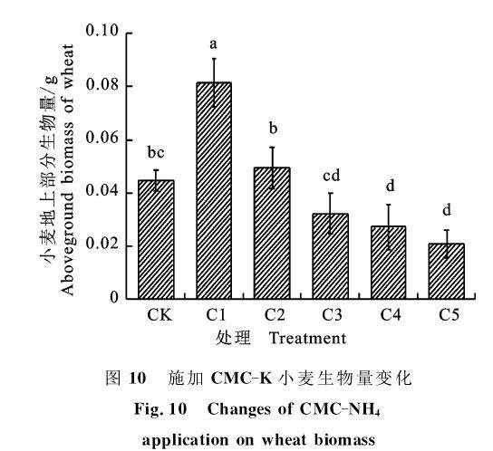 外植体灭菌处理对大戟多肉有什么影响