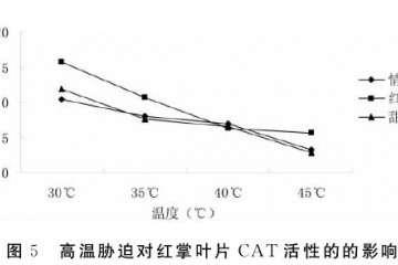 不同高温对盆栽红掌叶片CAT活性的影响