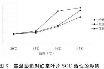 不同高温对盆栽红掌叶片sod活性的影响