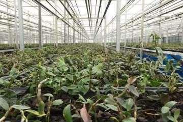 中药材盆栽怎么上盆和移栽的方法 图片