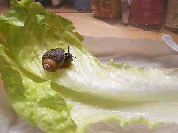 多肉叶片上有蜗牛怎么办