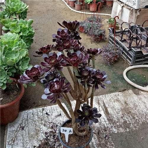 什么多肉植物爱开花