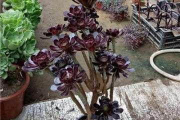 什么多肉植物爱开花 图片