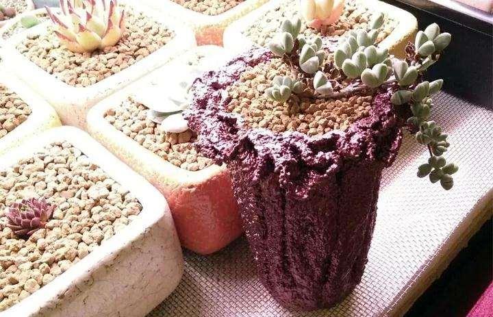图解 怎么用毛巾水泥做多肉植物的花盆