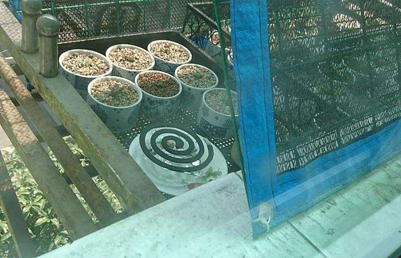 多肉植物怎么防鸟防蚂蚁的方法