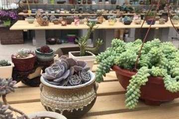 实体店和网店购买多肉植物 哪个好 图片