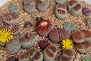 谈谈多肉植物怎么摄影的一些心得 图片