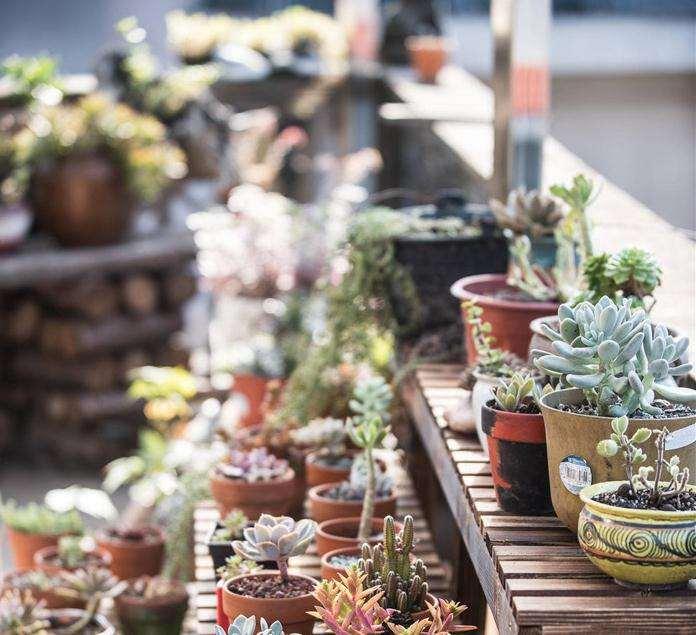 秋天怎么在阳台养多肉植物的方法