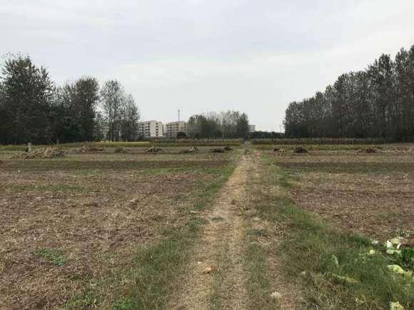 10亩土地搭建多肉大棚 要投资多少钱