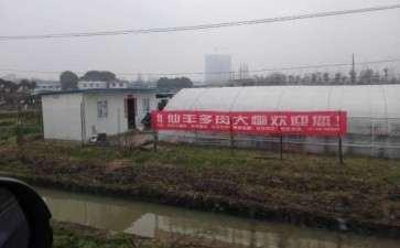 长沙仙丰多肉大棚地址在哪里 图片
