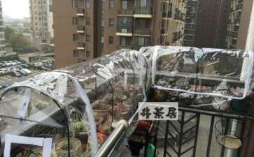 北京冬天多肉露养可以吗 担心冻伤