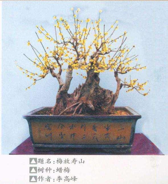 第九届中国鄢陵梅花盆景文化节