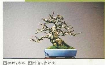 中国盆景艺术家协会为疫情募捐背后的故事