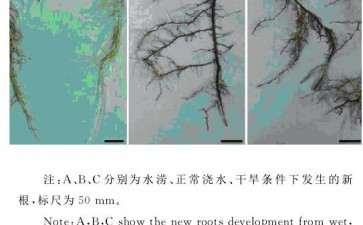 不同土壤含水量对葡萄盆栽根系生长的影响