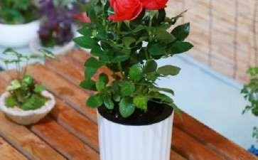 盆栽花卉怎么插花的构图原则