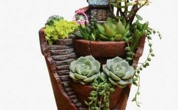 家庭组合盆栽怎么选题构思的3个方法