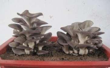蘑菇盆栽特性对室内景观设计的2个影响